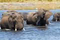 African Elephants Stock Images - 28185204