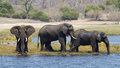 African Elephants Royalty Free Stock Photography - 28185207