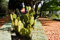 Prickly Pear Cactus Stock Images - 28190894