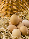Brown Eggs Royalty Free Stock Photography - 28193307