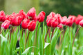 Flowers In Rainy Day Royalty Free Stock Photo - 28213025