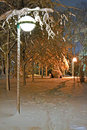 Night Illumination In Winter Park, Seasonal Environment, Royalty Free Stock Photos - 28230498