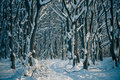 Sunset Winter Forest Stock Photography - 28242532