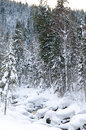 Winter Taiga Forest Stream Royalty Free Stock Photography - 28248017