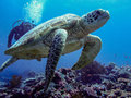 Scubadiving In Malaysia Royalty Free Stock Images - 28254079
