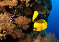 Coral Reef Royalty Free Stock Photos - 28255508
