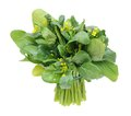 A Bunch Of Chinese Spinach Royalty Free Stock Image - 28271976