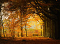 Autumn Park Royalty Free Stock Images - 28317919