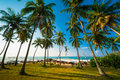 Palm Forest Royalty Free Stock Photos - 28336428