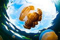Jelly Fish Stock Images - 28340584