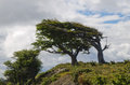 Wind-bent Tree In Fireland (Tierra Del Fuego), Patagonia, Argent Stock Photography - 28343252