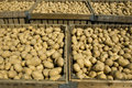 Large Bins Full Of Potatoes Royalty Free Stock Image - 2844516