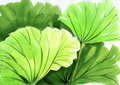 Watercolor Painting Of Green Lotus Leaves Stock Image - 28412701