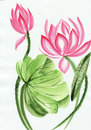 Watercolor Painting Of Pink Lotus Flower Stock Image - 28412711