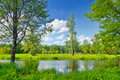 Summer Landscape With Lonely Tree And Blue Sky Stock Photos - 28419193