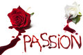Bleeding Roses For Passion Royalty Free Stock Photo - 28434635