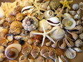 Shells Royalty Free Stock Images - 28436729