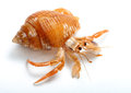 Hermit Crab Royalty Free Stock Images - 28446409