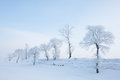 Rime Stock Images - 28458254