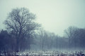 Lonely Tree In The Spring Field With Snow And Mystical Fog Stock Photos - 28467853