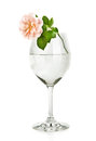 Wine Glass With Water And Pink Rose Flower Stock Photos - 28477983