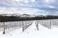 Vineyards Rows Covered By Snow In Winter. Chianti, Florence, Italy Stock Image - 28480451
