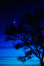 Mysterious Night Landscape Royalty Free Stock Photos - 28486078