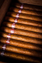 Cigars In Humidor Royalty Free Stock Images - 28495779