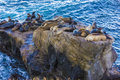 Sea Lions On Rock In La Jolla Cove, San Diego CA US Royalty Free Stock Photos - 28504688