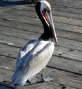 Pelican On A Pier Royalty Free Stock Photo - 28507515