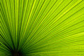 Palm Leaf Texture Stock Photo - 28525120