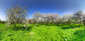 Spring In Apple Garden Stock Photos - 28534673