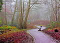 Park Bench On A Foggy Day Royalty Free Stock Image - 28567946