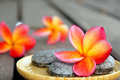 Red Frangipani Flower With Stones Stock Images - 28569594