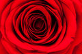 Close Up Of Red Rose Petal Stock Images - 28576364