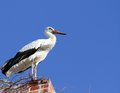 Stork Standing On The Old Brick Chimney Stock Photos - 28622643