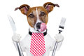 Hungry Dog Stock Photography - 28624662