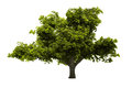 Tree Isolated Royalty Free Stock Image - 28631886
