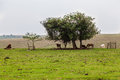 Cows Horses And A Tree Royalty Free Stock Photo - 28655645