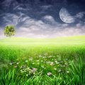 Beauty Evening On The Meadow. Royalty Free Stock Photo - 28665775