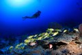 Coral Reef Stock Image - 28680151