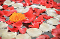 Close Up Of Marigold Flower And Petal Of Red And White Rose Stock Photo - 28687860