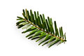Fir Branch On White Backgound Royalty Free Stock Photography - 28707807