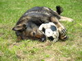 German Shepherd With A Ball. Stock Images - 28712664
