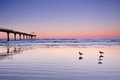 Three Seagulls In The Beach At Sunset Stock Photos - 28725643