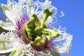 Passion Fruit Flower Macro Stock Images - 28737194