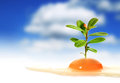 Egg And Plant. Stock Photography - 28742262
