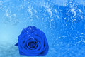 Beautiful Blue Rose, A Lot Of Ice And Water Royalty Free Stock Images - 28769409