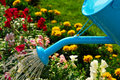 Watering Flowers Royalty Free Stock Photo - 2881595