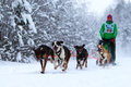 Race Of Draft Dogs Royalty Free Stock Image - 28803256